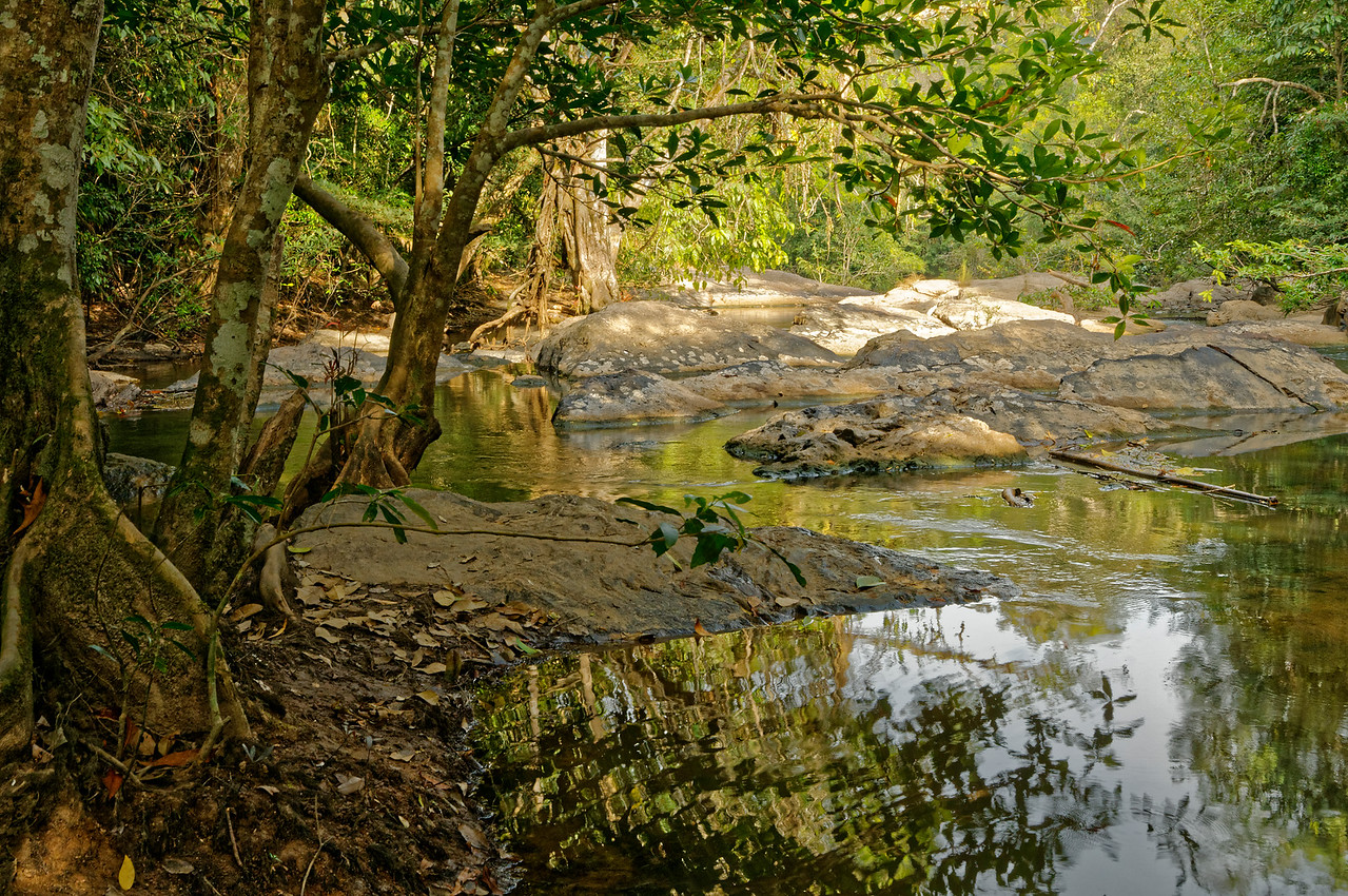 Stream along a trail leading to Khao Yai's Pa Kuay Mai waterfall
