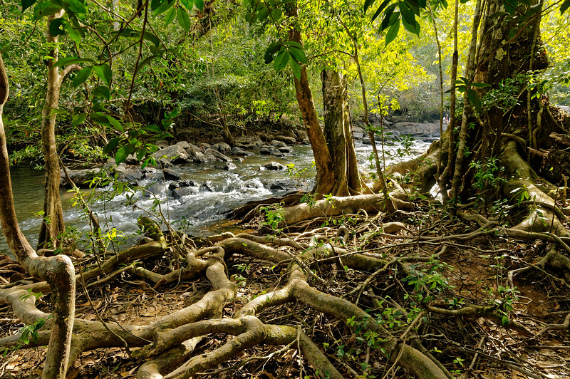 Roots and stream, Khao Yai National Park