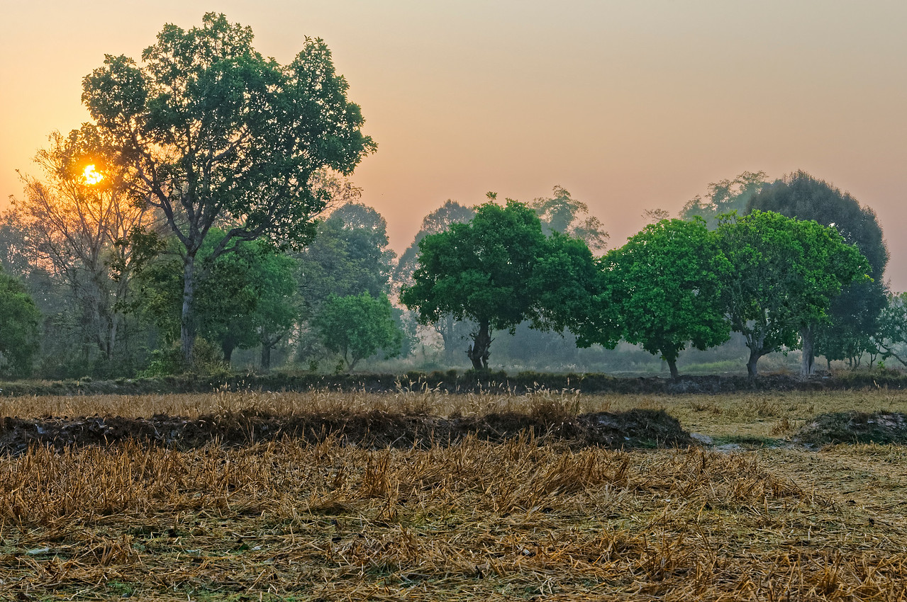 Harvested field in early-morning light