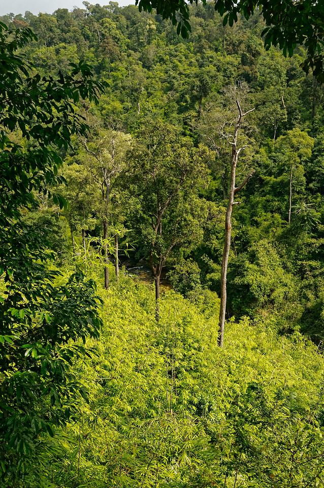 Forested hillside at Phu Chong
