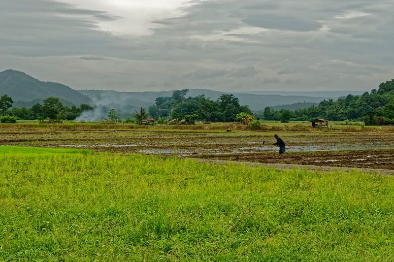 Khon Kaen rice farmer
