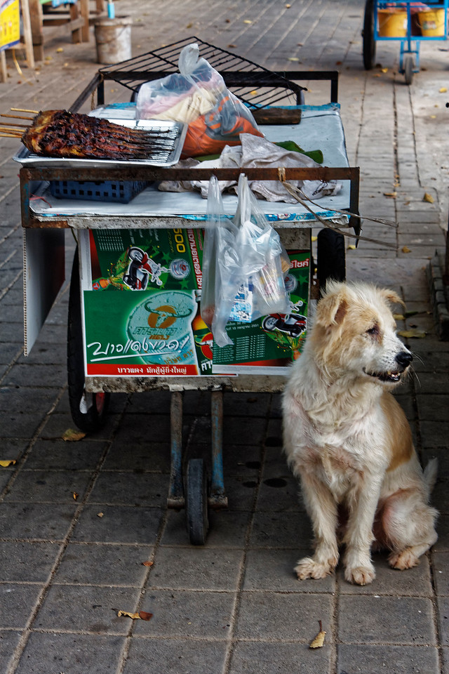 This charming guy seemed to be standing guard over the food cart. I don't know what kept him from wanting to sample the wares for himself.