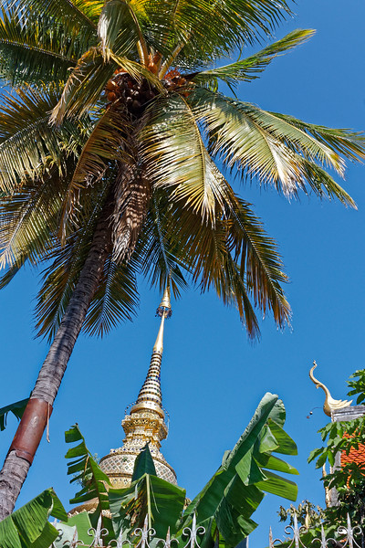 Tops of structures at Wat Lamchang, eclipsed by a coconut palm, viewed from Moon Muang Soi 7 on a brilliant blue morning