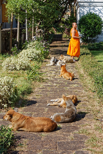 Monk and followers, Wat Chiang Man, Chiang Mai