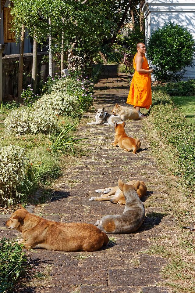 Monk and followers, Wat Chiang Man, Chiang Mai