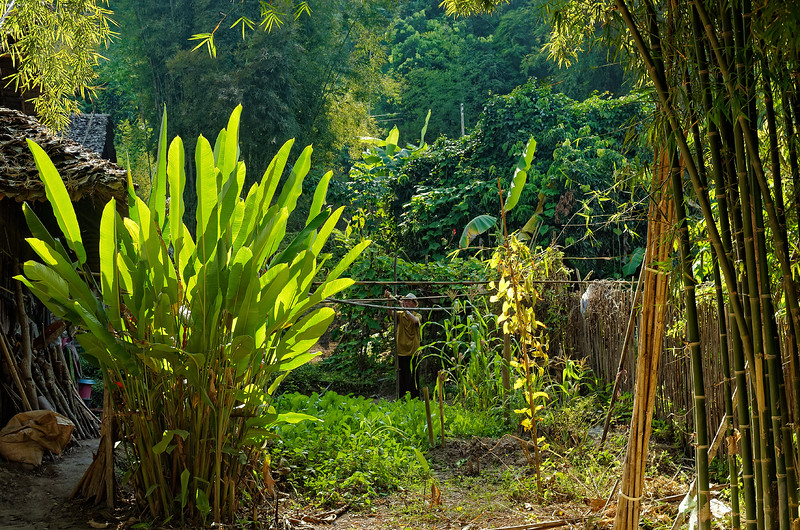 Gardener amid his lush surroundings in a hill tribe village in Mae Sa Valley