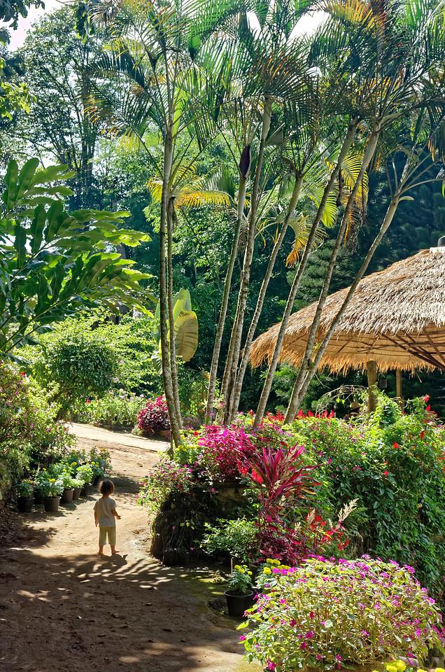 A child's tropical paradise, Doi Pui