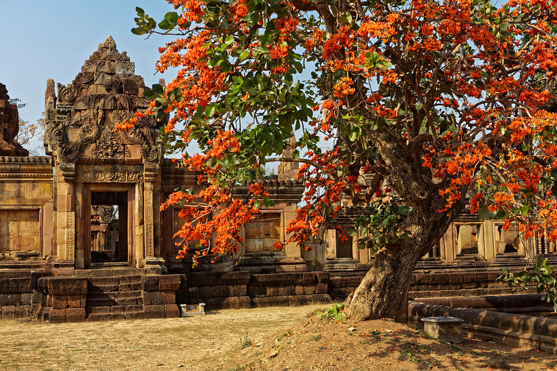 The striking flame-of-the-forest tree at this temple dedicated to Shiva is, probably by coincidence, a tree whose flowers are said to be used in a ritual ceremony honoring that same god in the Indian state of Telangana.