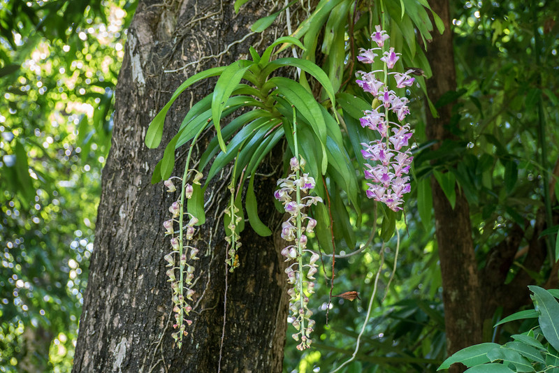 Orchids in the park