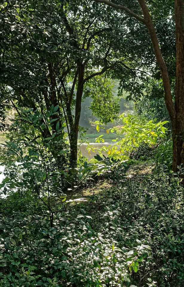 View in Somdet Park, Sisaket