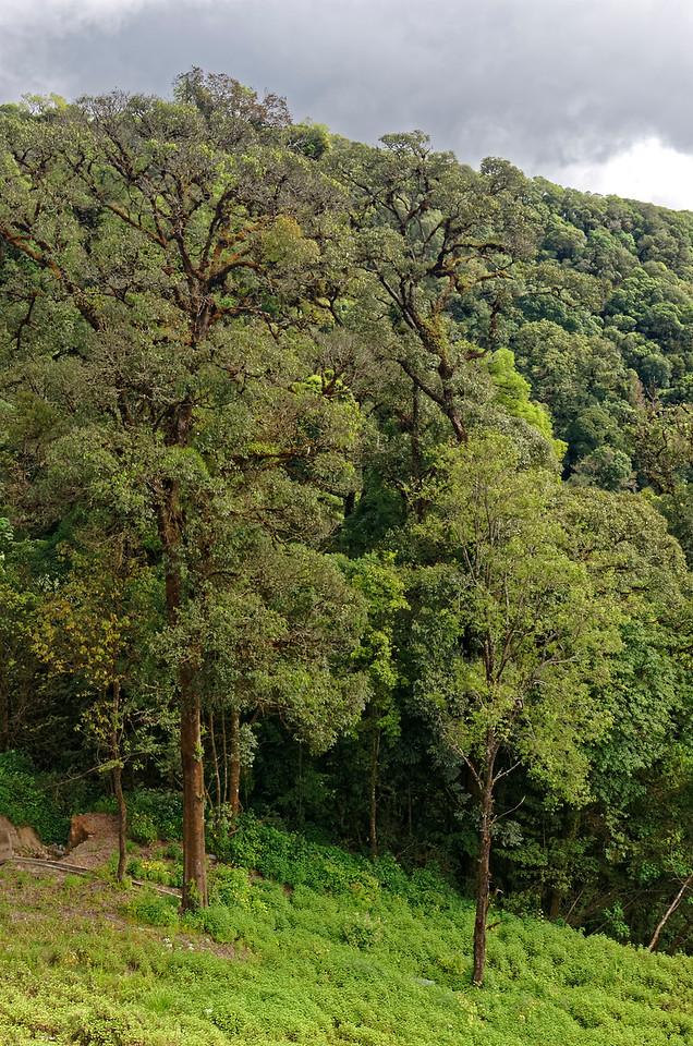 On the slopes of Doi Inthanon
