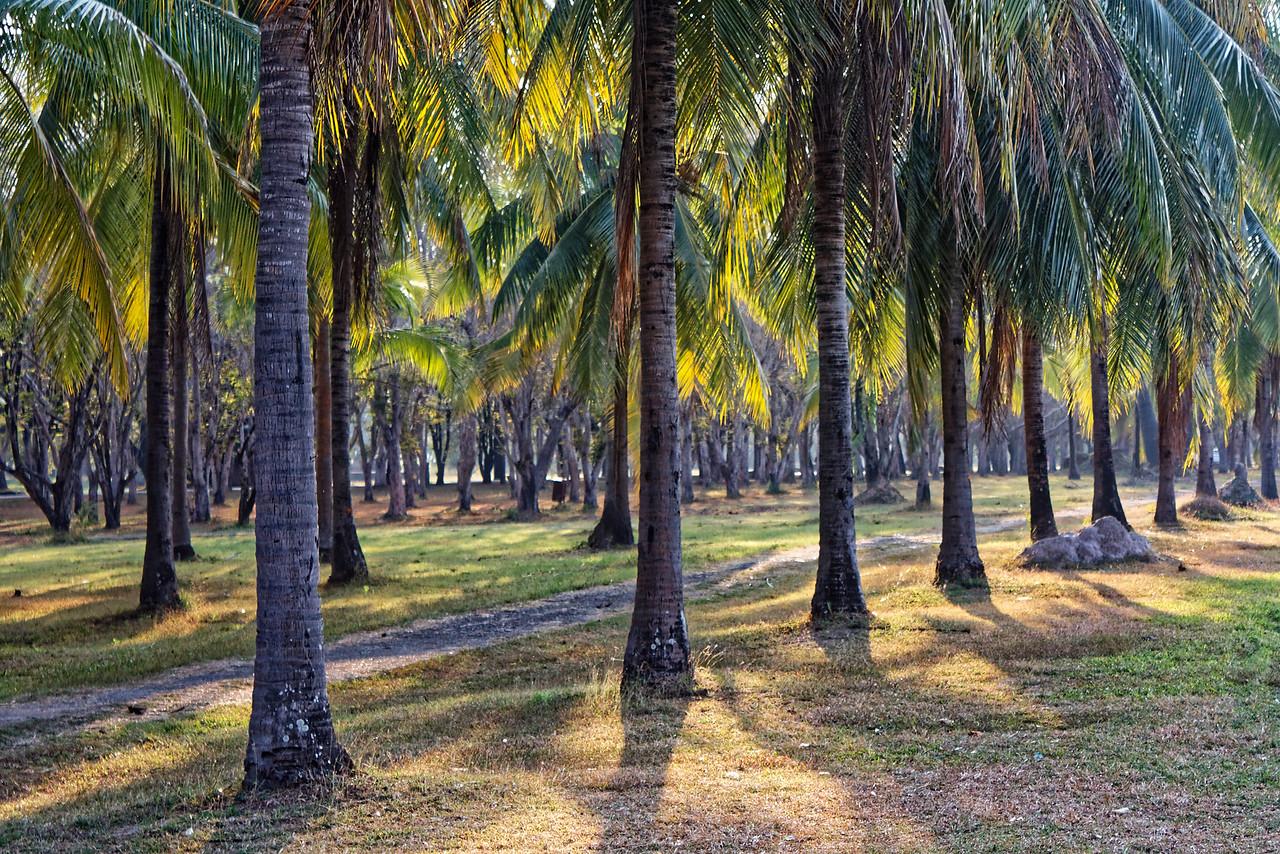 Rows of palms at Wat Mahathat in Sukhothai