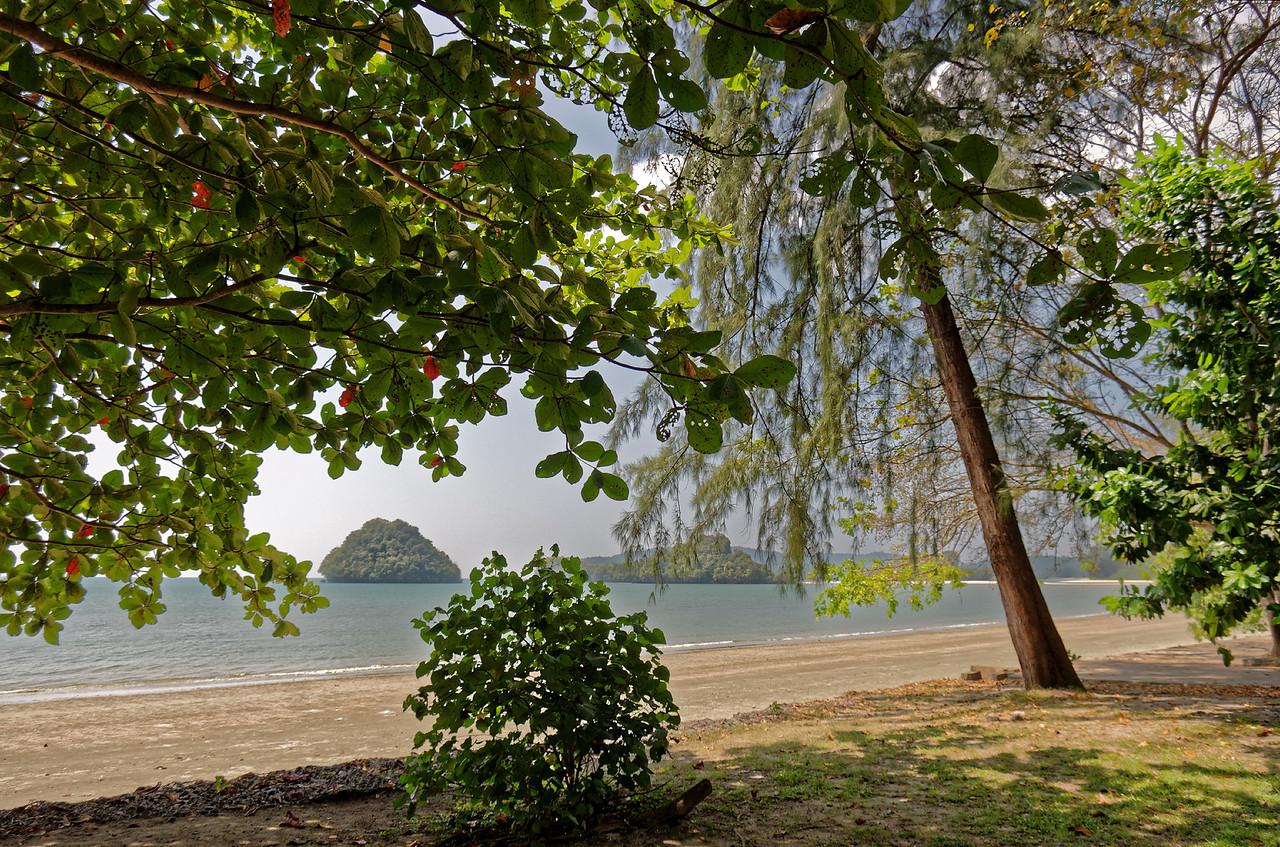 Sea almond and casuarina on the beach at Ao Nang, southern Thailand