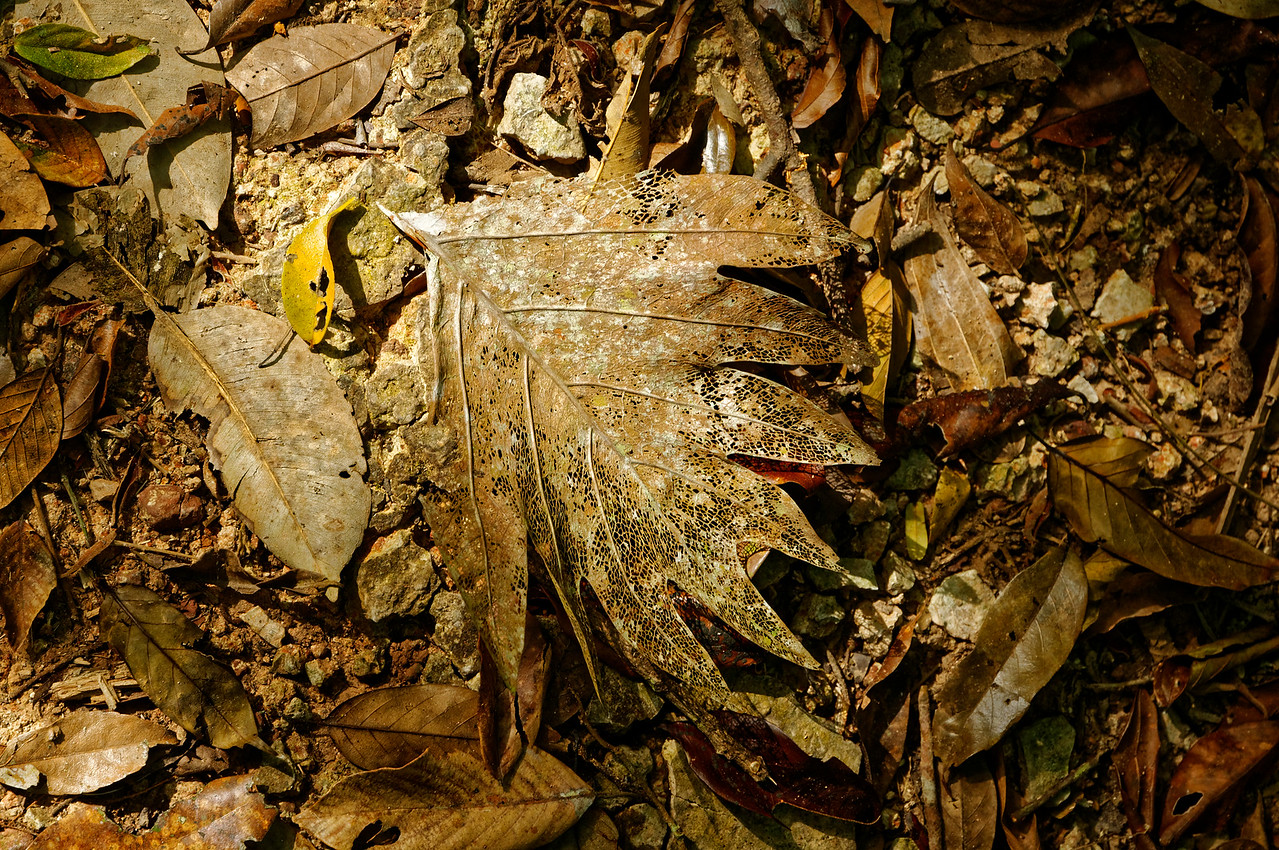 The forest floor along one of the trails in Khao Yai National Park