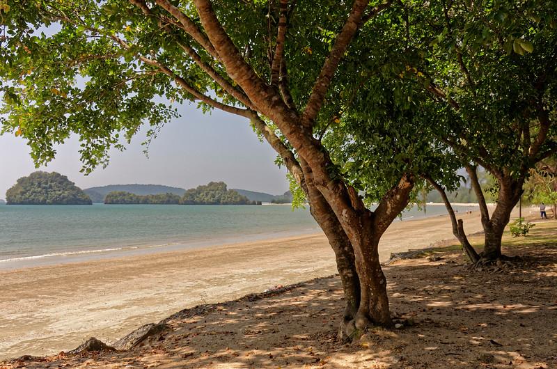 Sea almond or tropical almond <i>(Terminalia catappa)</i> on the beach at Ao Nang