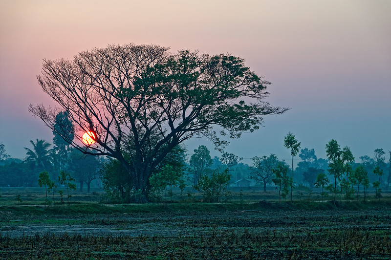 Early morning sunrise over Isaan rice fields awaiting the next growing season