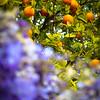 Fruit and Flora at  Park Güell