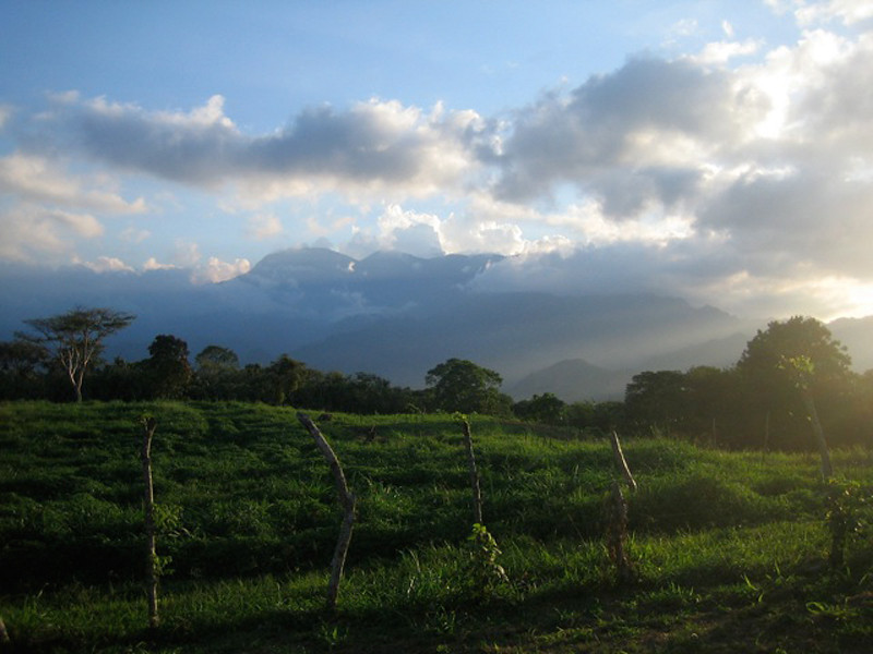 """""""Plantain Fields at Sunset"""""""