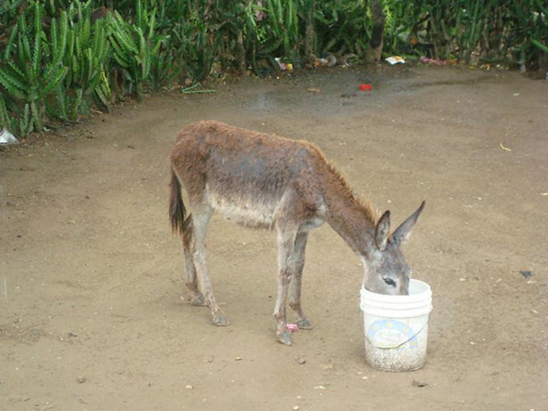 """""""Thirsty Donkey"""""""