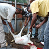 """Host and His Guests Slaughter and Flay a Goat for Dinner, Ethiopia"""