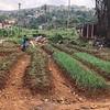 Community Garden in Regent, Sierra Leone