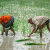 Agriculture in Monsoon Season