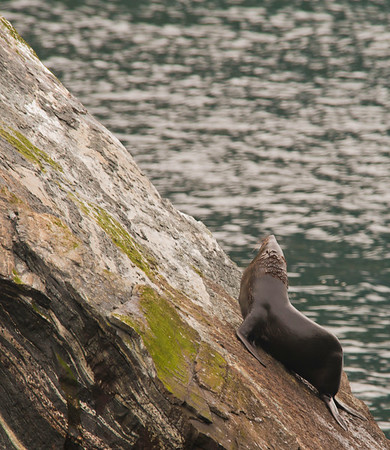 Milford Sound Seal