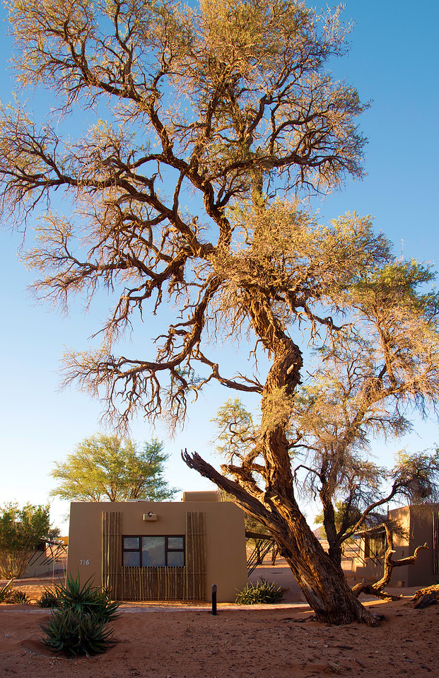 Bungalows at the Sossusvlei Lodge