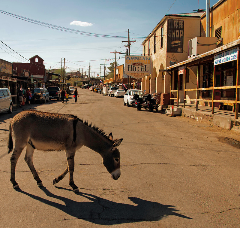 Street Sceen in Oatman, Arizona