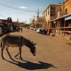 Street Sceen in Oatman, Arizona