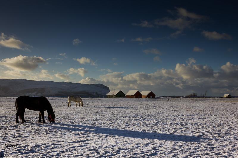 Winter at Grotle/Vinter på Grotle