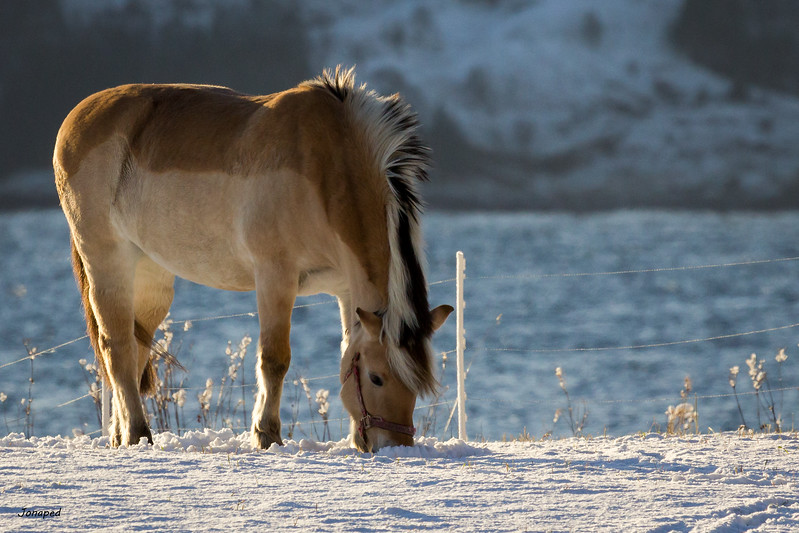 Out Enjoying the Winter Sun/ Ute og Nyt Vintersola