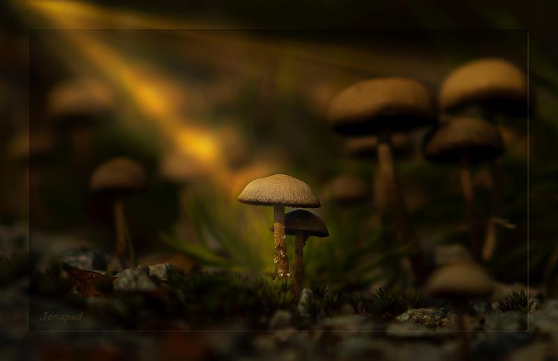Lys i Haustskog/Light in Autumn  Forest