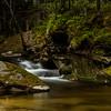 The old forest/Gamal skog