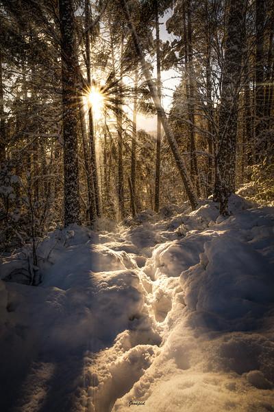 Vinter i Lia