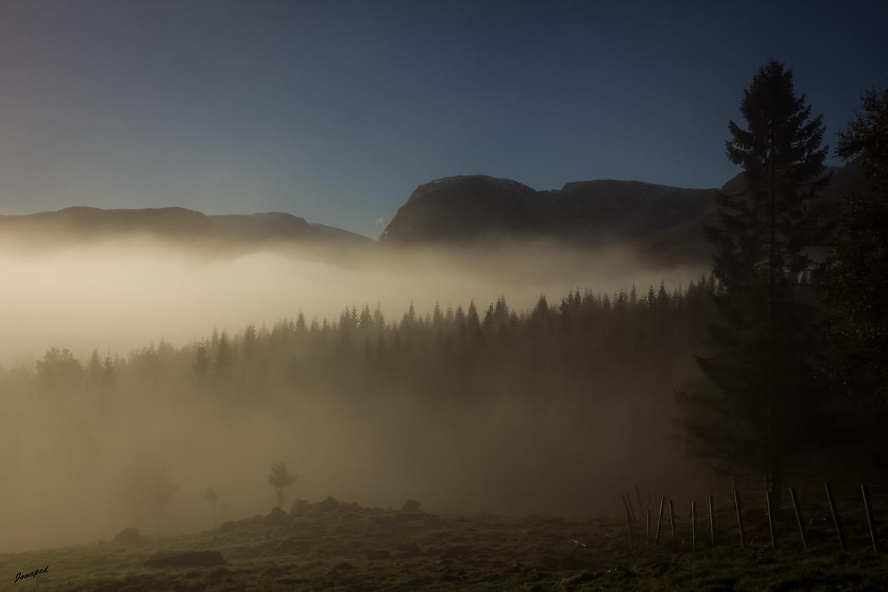 Tåke i Lia,Fog in the Woods