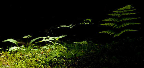 In the darkest forest/I den mørkaste skog