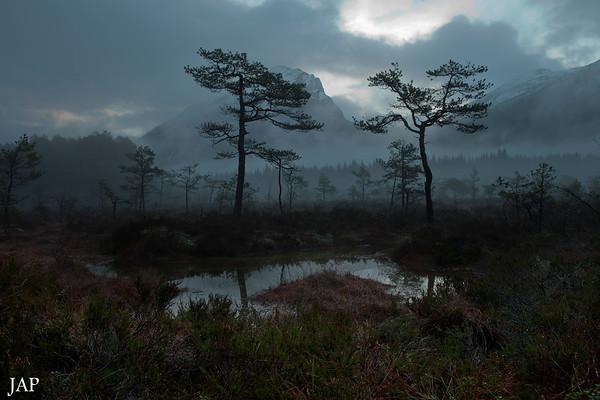 Gloppen<br /> Ute og ser etter vinter..det eg finn er trollskog..men ok det og :-)<br /> Out looking for winter..ended up in the troll's forest..but I'm used to that..