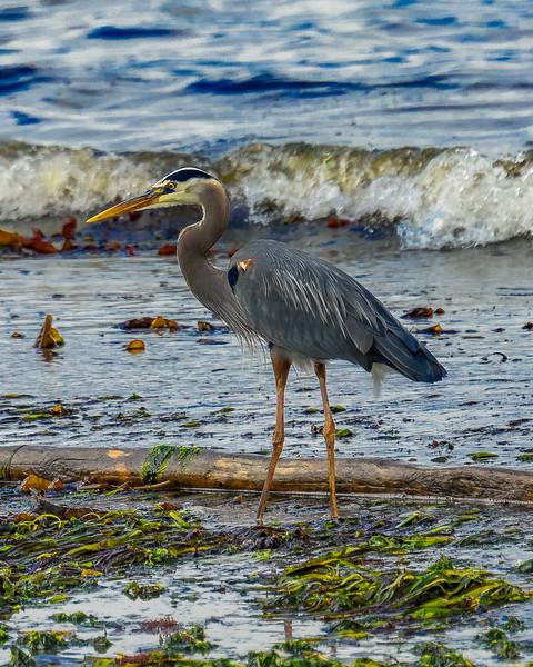 Low Tide Beauty