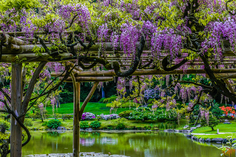 Wonderful Wisteria