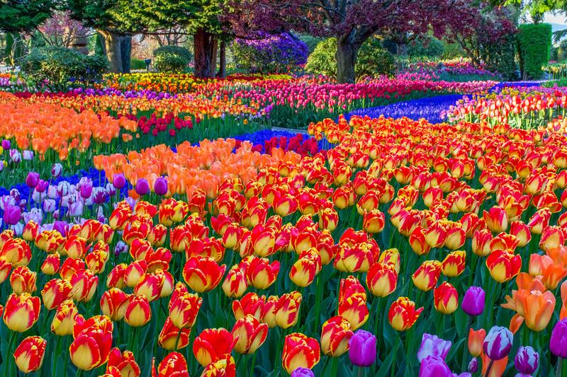 Spring Garden Spectacle