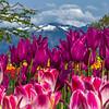 Cascade Tulip Crown