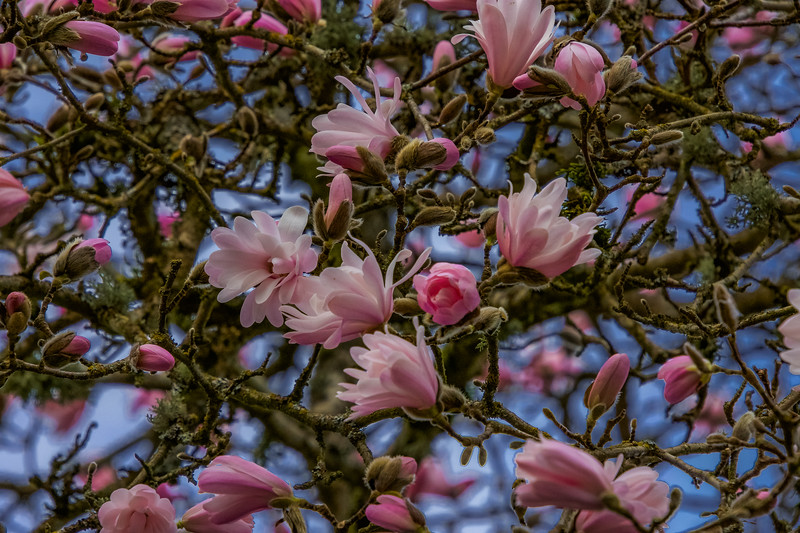 Beneath the Magnolia Tree