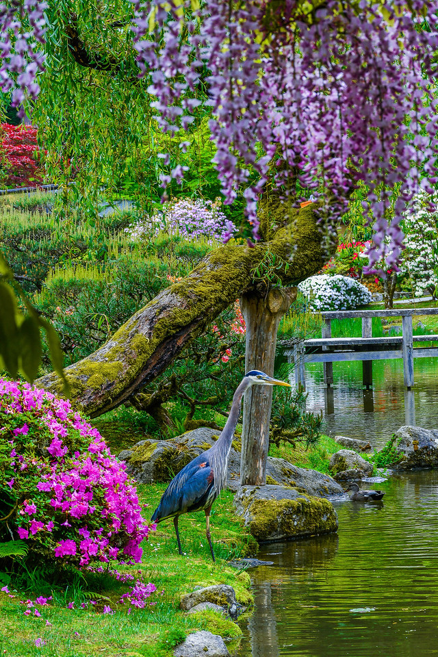 Garden Elegance