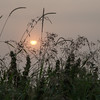 Misty August Sunrise in the fens - 3