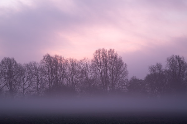 Just a hint of the misty-morning sunrise to come at Bare Hill, Over, Cambridge