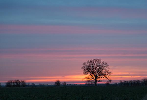 Haven Drove Oak waiting for sunrise