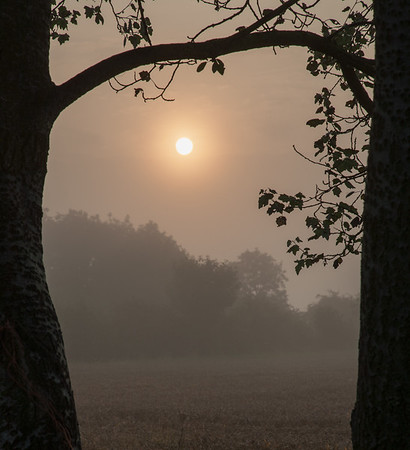 Misty August Sunrise in the fens - 7