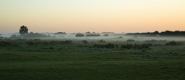 Horses in the mist, Iram Drove, Willingham, Cambridgeshire