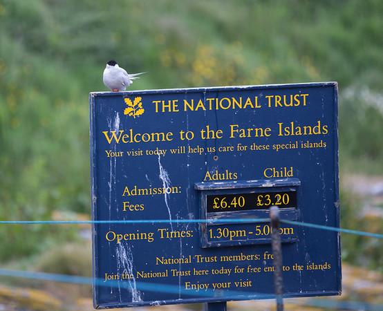 Staple Island welcoming committee